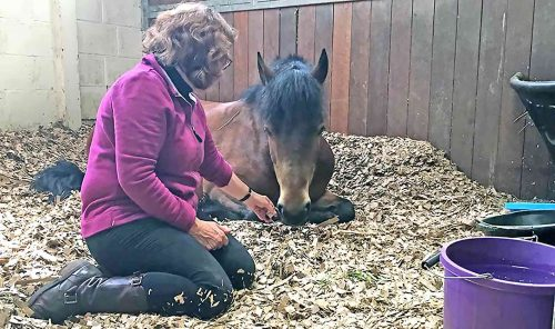 Caroline Ingraham With A Horse With Suspected Gut Ulcers