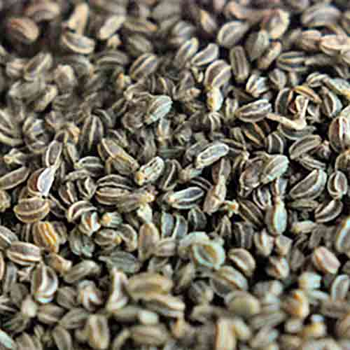 Celery Seed CO2 Extract