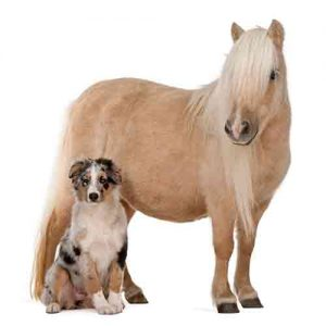 Dual Canine - Equine Kit