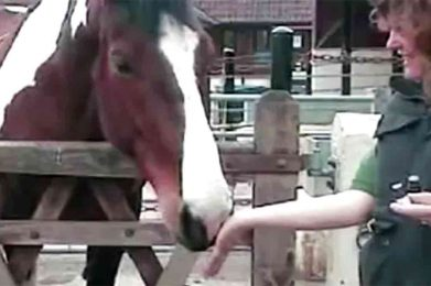 Essential Oil Offering To A Horse