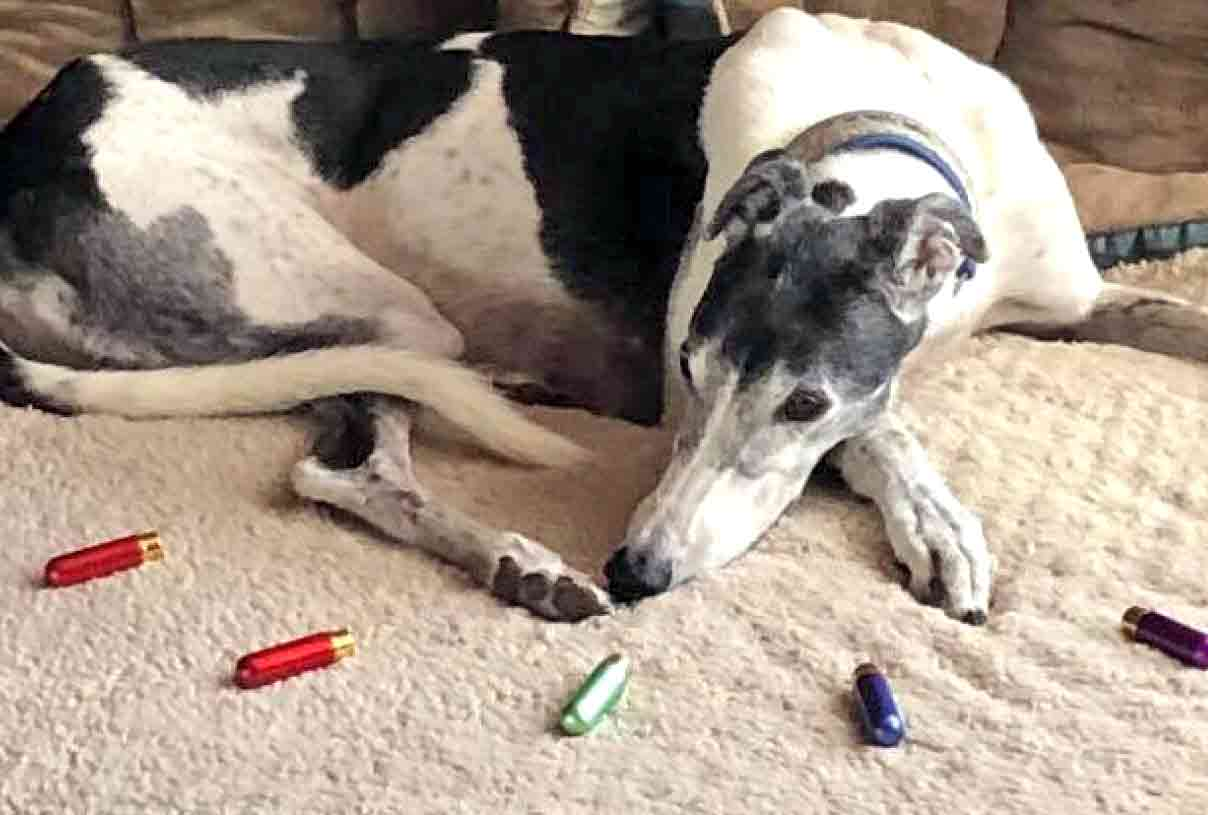 Greyhound Inhaling Essential Oils