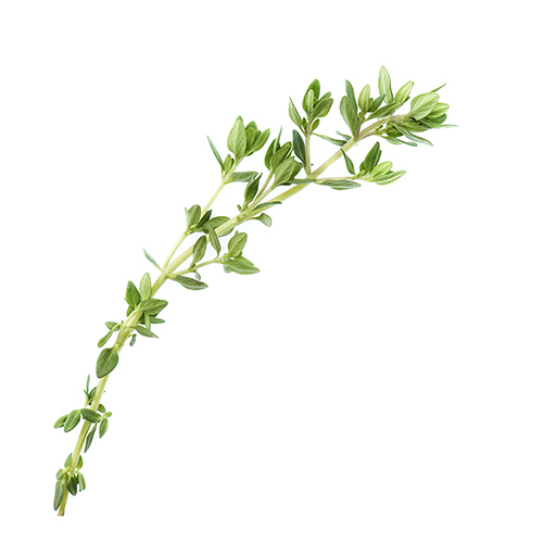 Thyme Aromatic Water