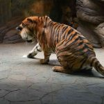 The Tigress Makes Her Selection of Essential Oil Cloth
