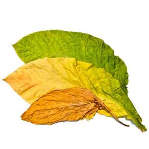Tobacco Leaf Kit